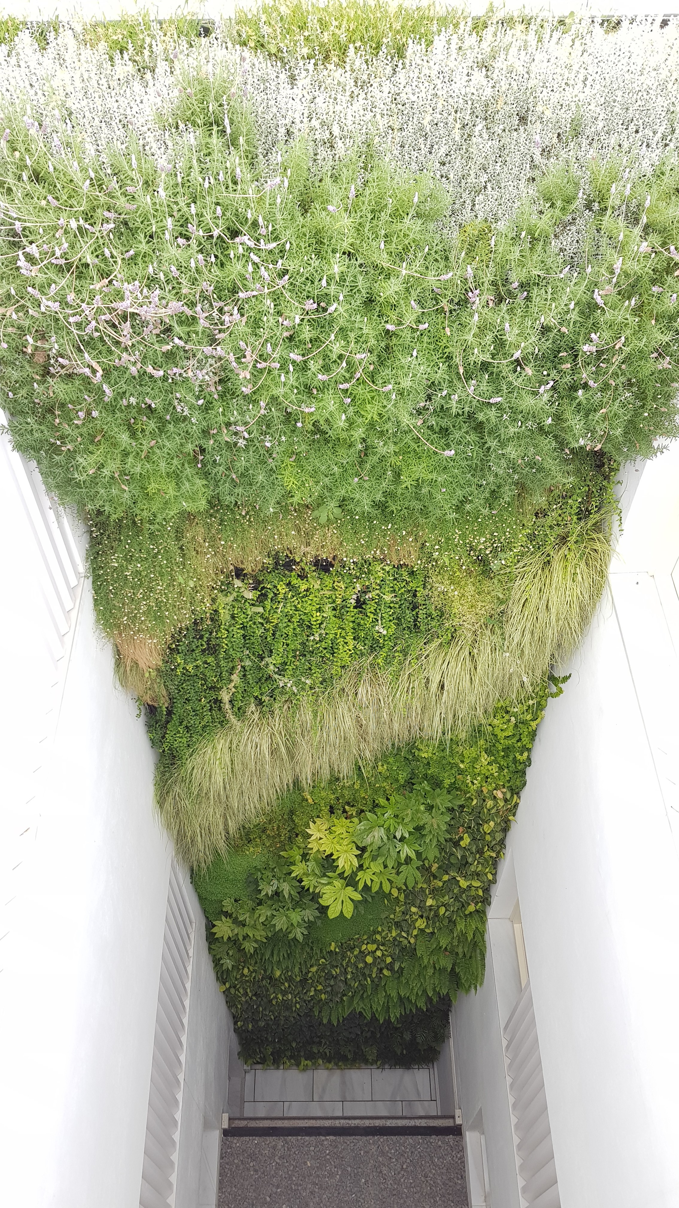 Living Walls CPD for Architects
