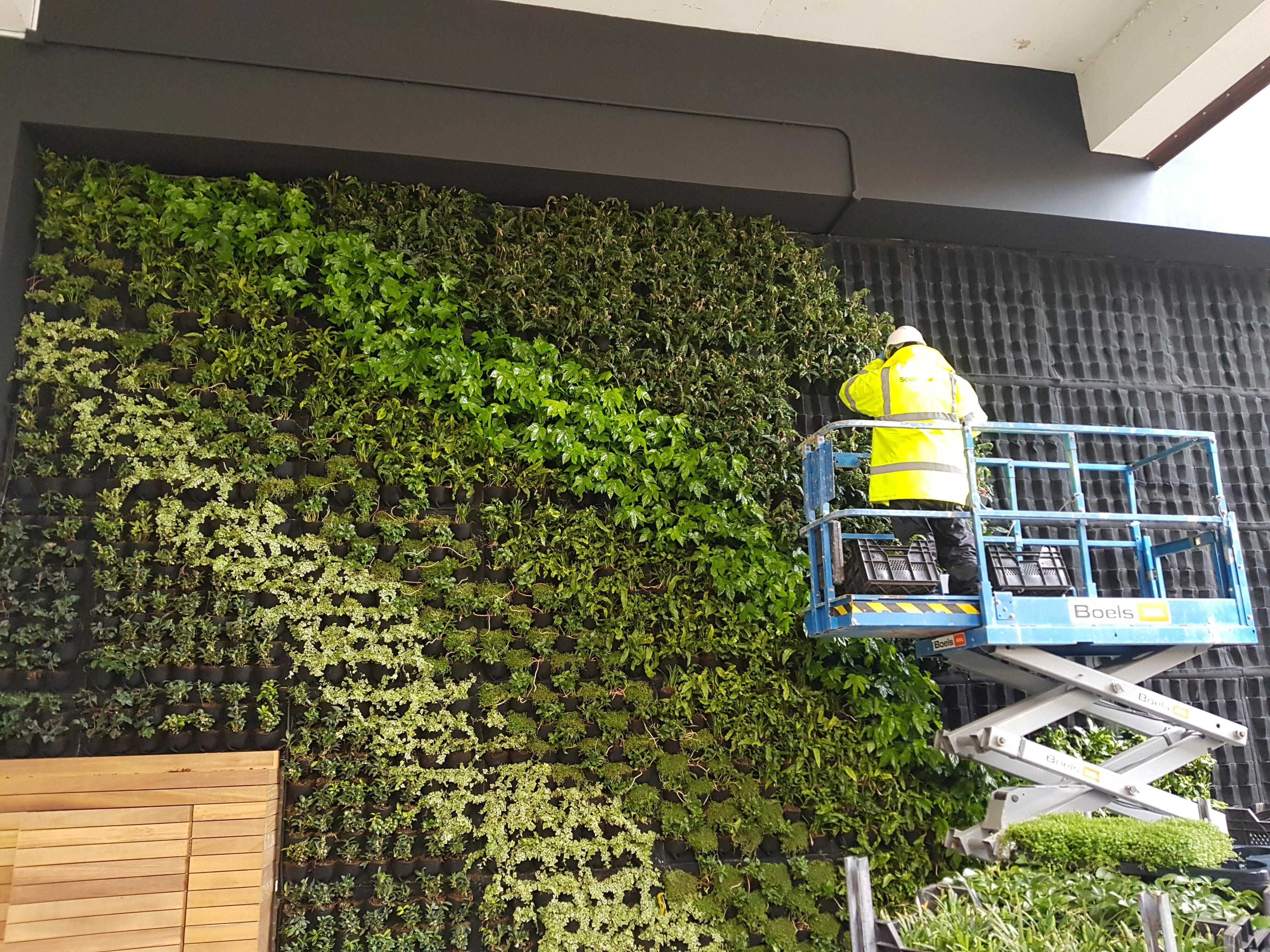 Green Wall Hammersmith After