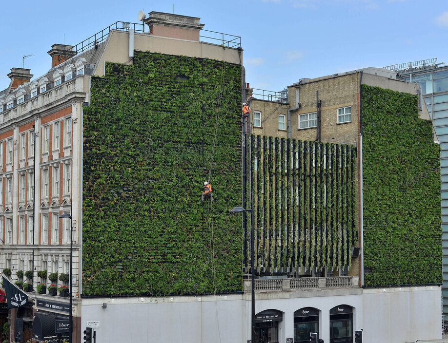 Living Wall at the Rubens Hotel Victoria installed by Scotscape