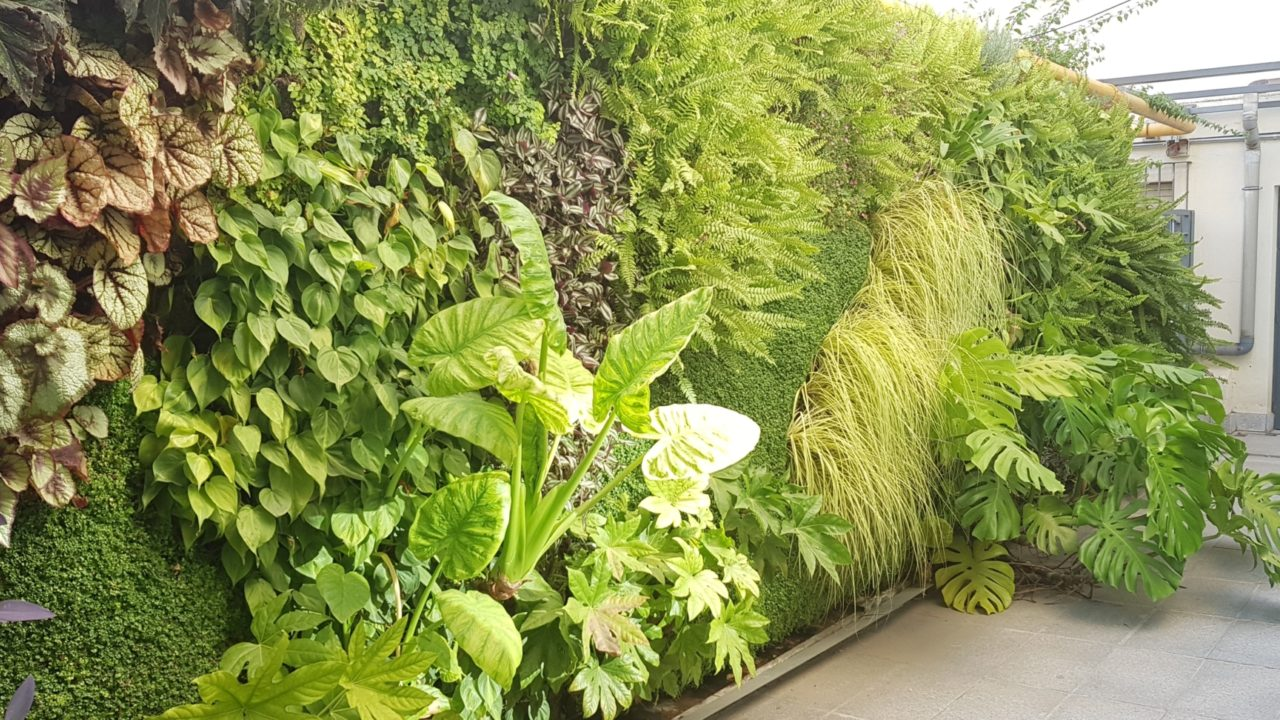 Living Walls CPD for Architects and Landscape Architects