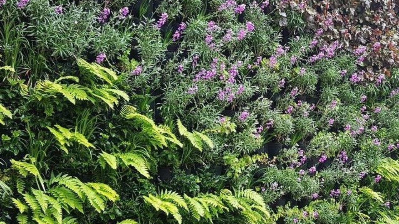 Scotscape's Living Wall System accredited Class 0 Fire Retardancy