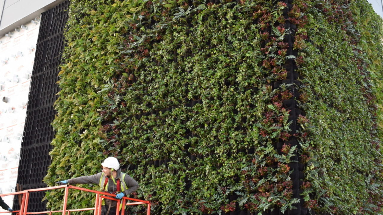 Living Walls design, installation and maintenance