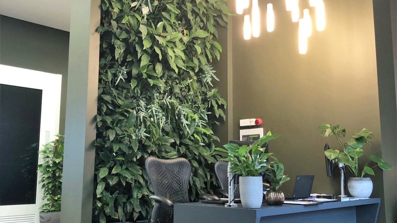 Living Walls and Plants for Workplace Wellness
