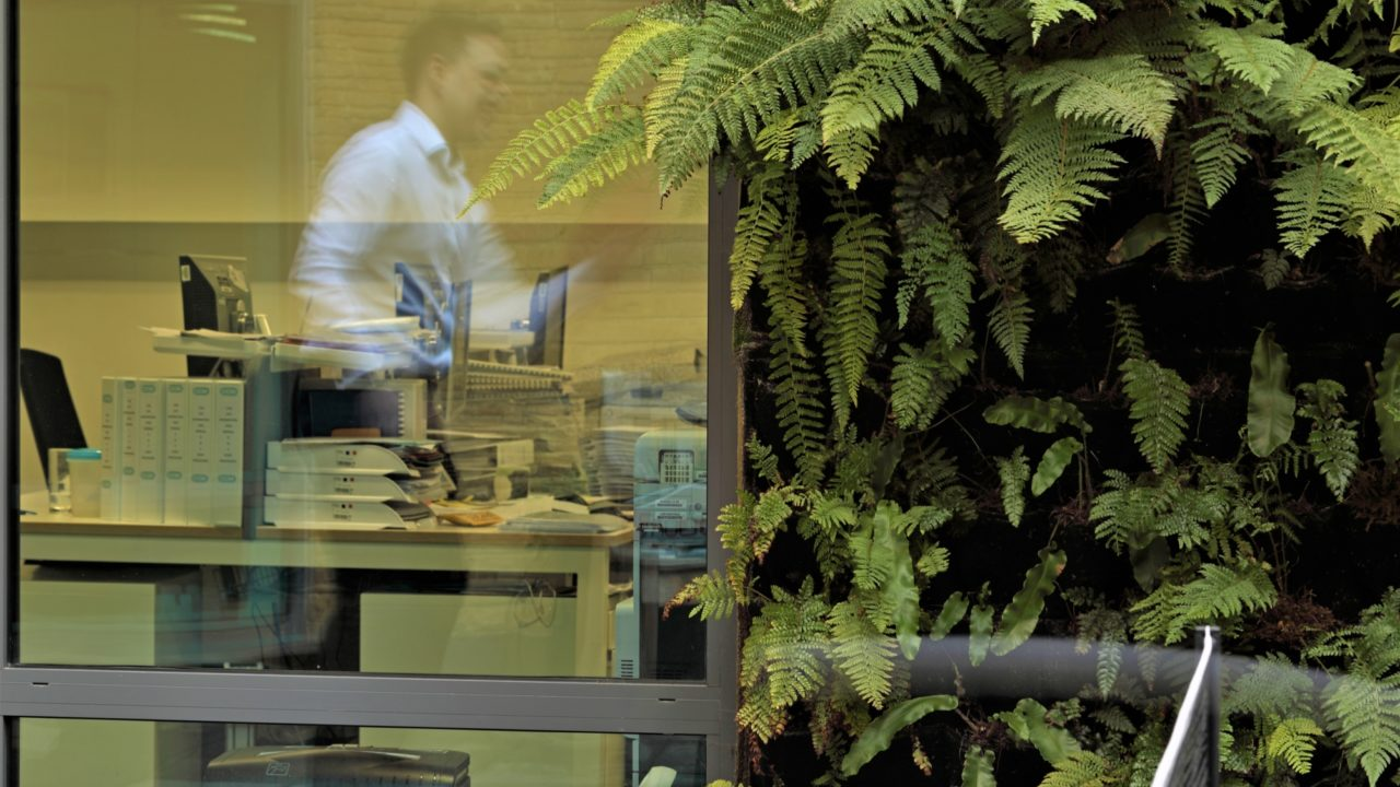Living Wall interior landscaping at CCM Facilities Management