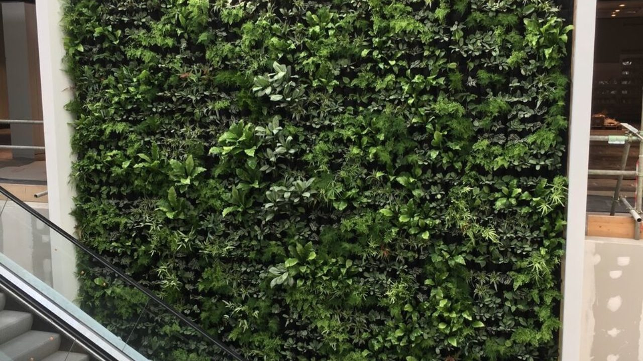 Living Walls at the House of Fraser Rushden Lakes