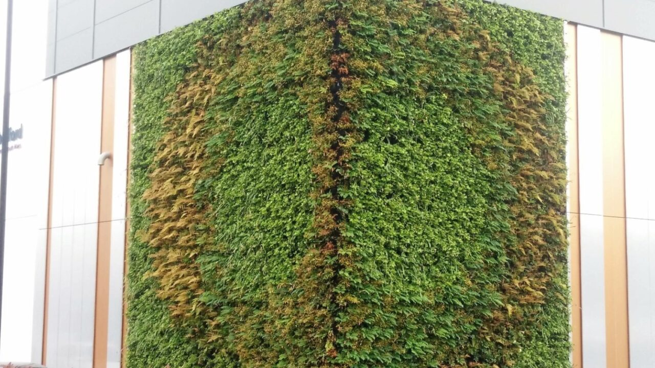 Living Walls and Biophilic Design is this just Greenwashing?