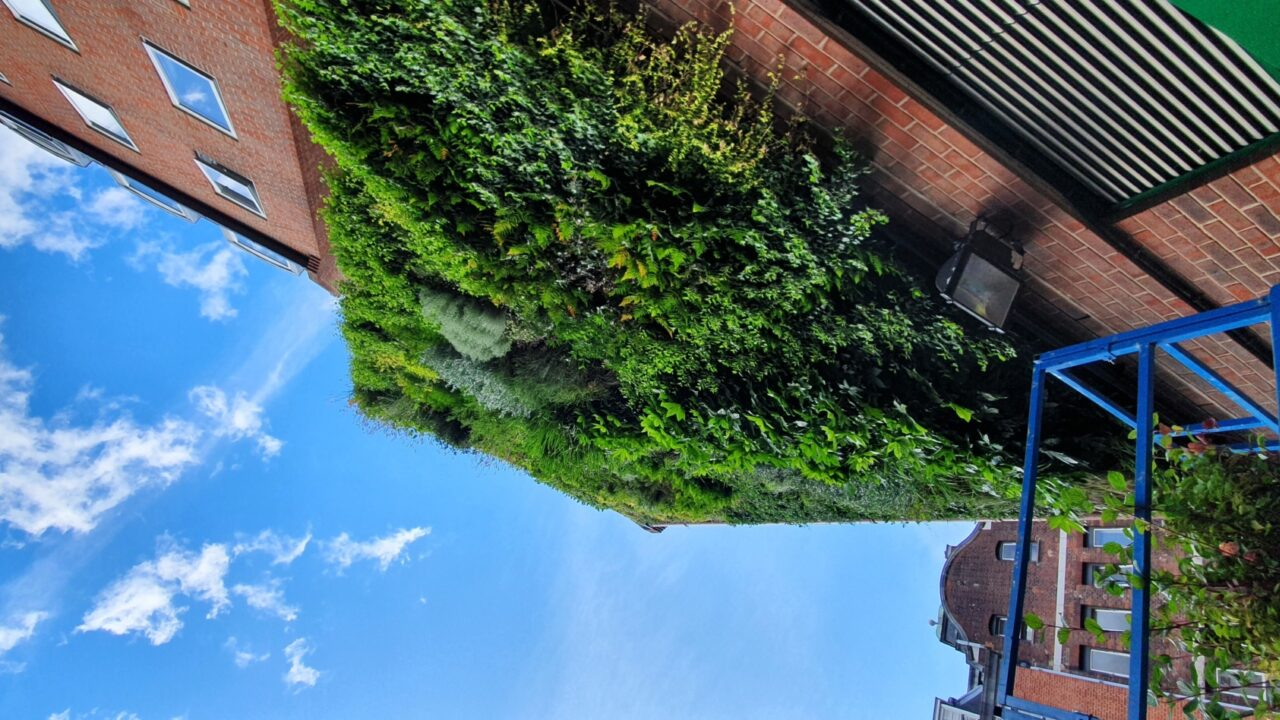 Living Walls and Urban Greening for Business Investment Districts