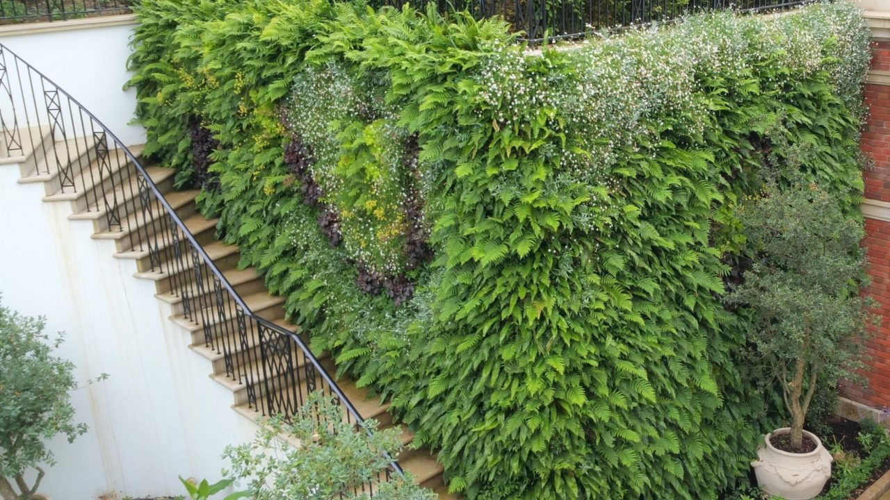Living Walls, why specify them for your home or office?