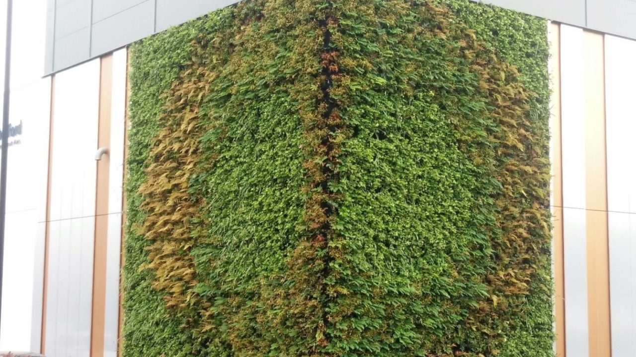 Living Walls at the Rutherford Cancer Care Centre