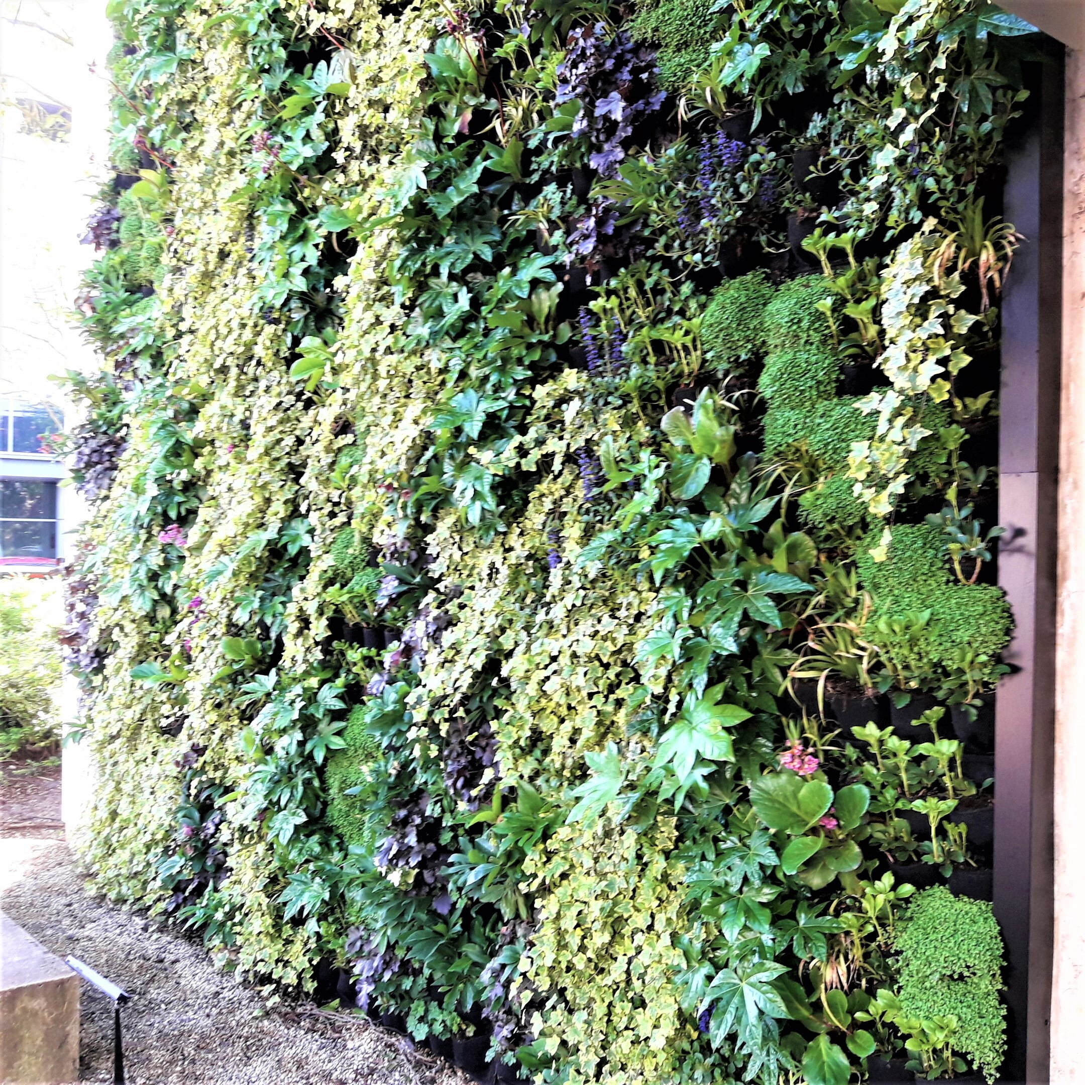 Living Wall Oxford Science Park
