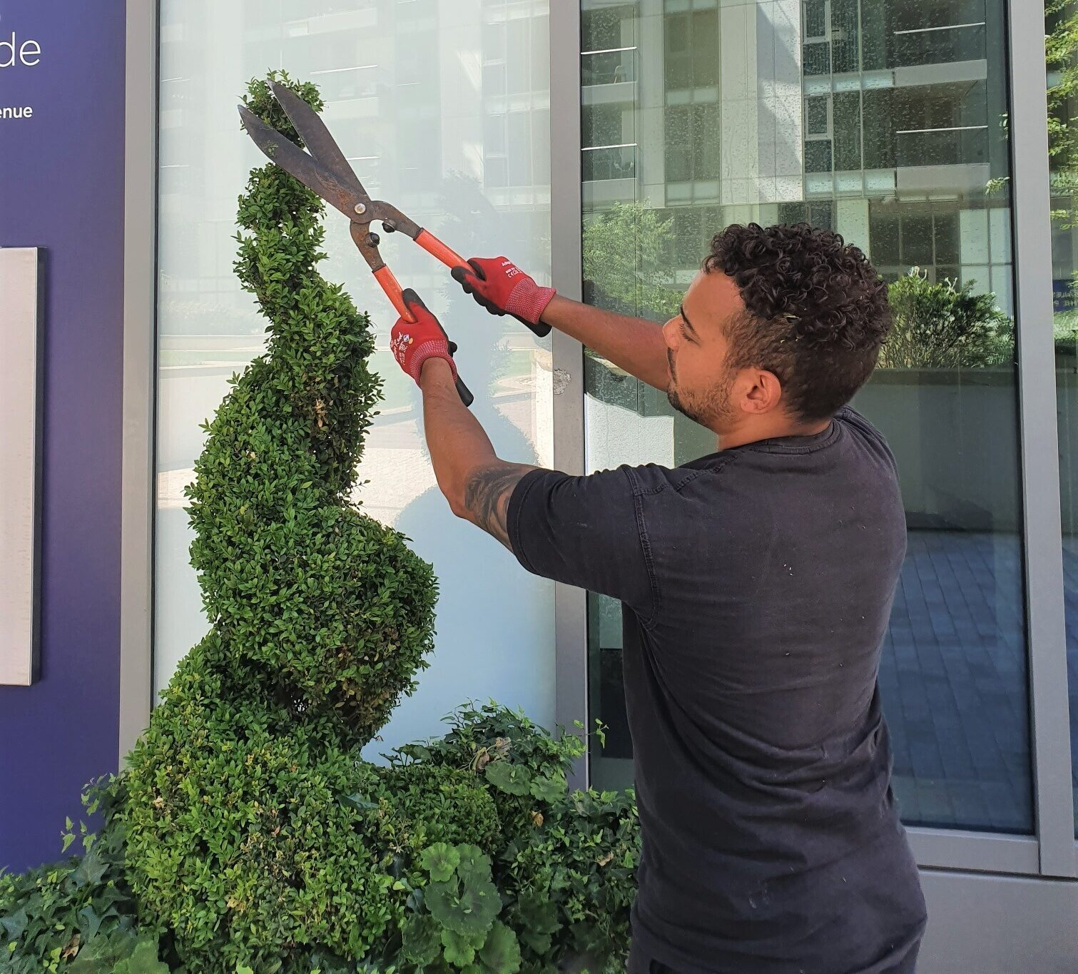 Living wall green wall groundscape team