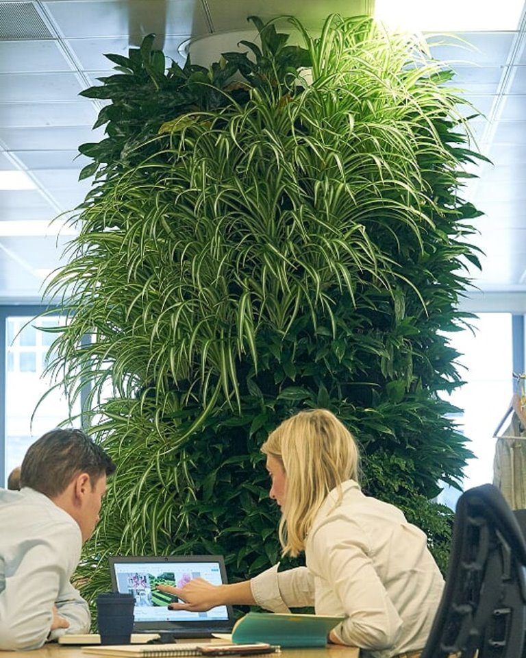 Living Walls and Plants to support improved Mental Health image
