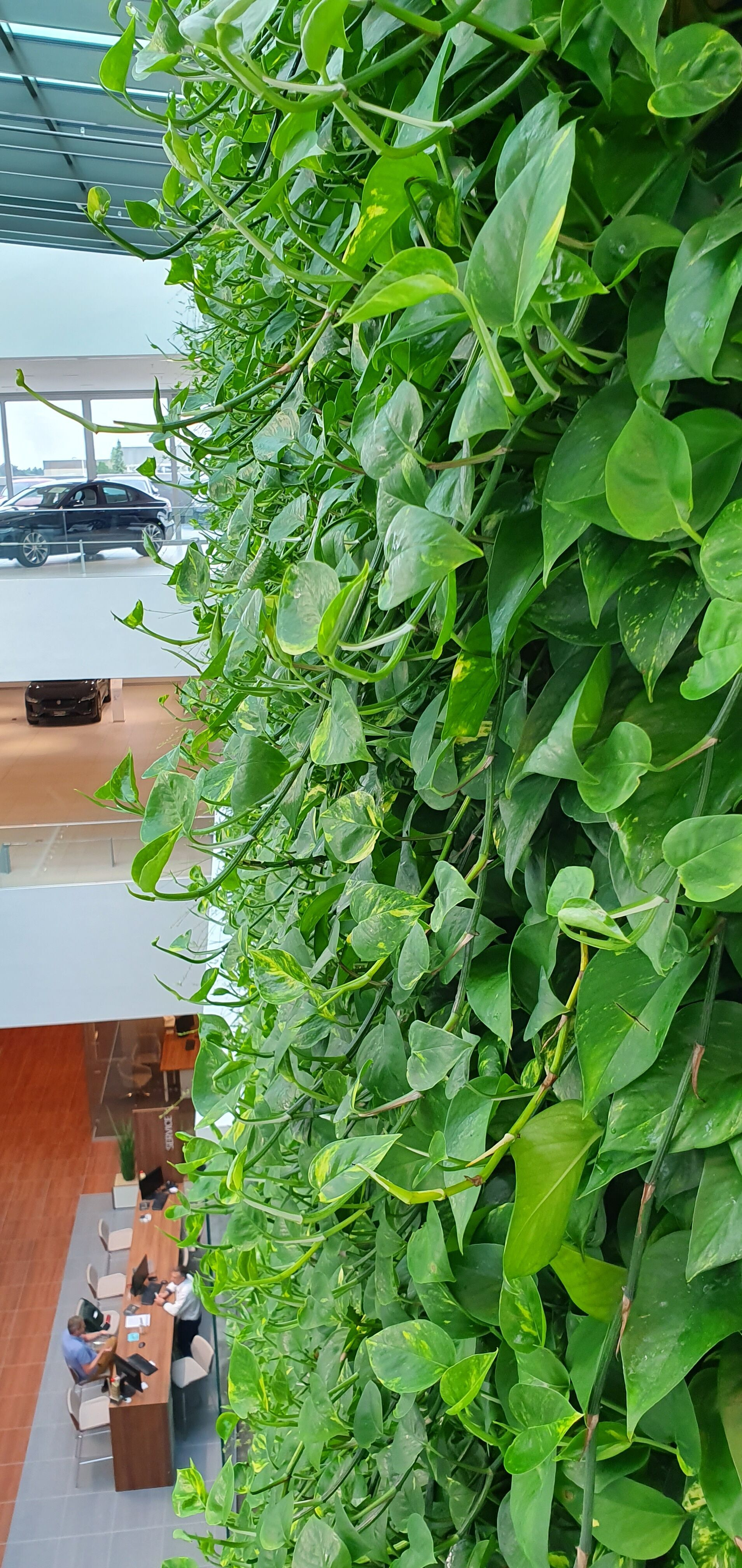 Living Wall System Fytotextile Plant Health
