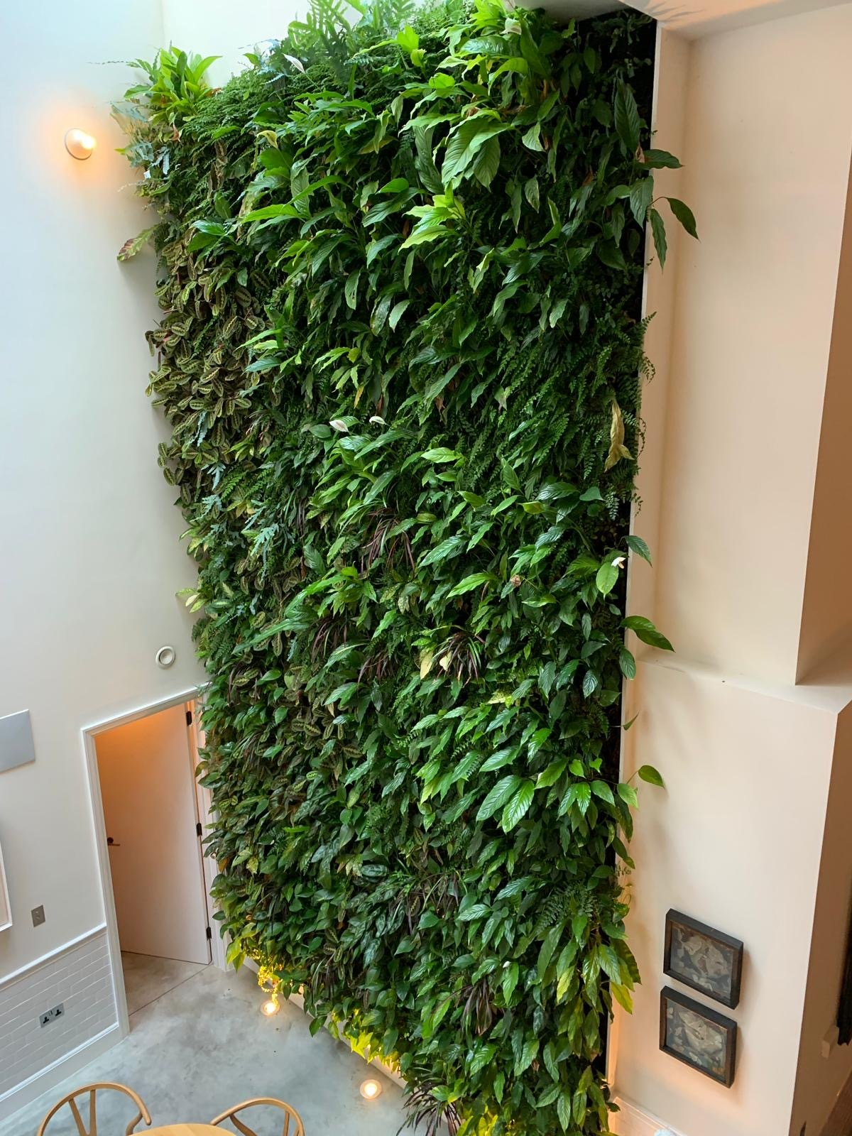 Living wall Green wall