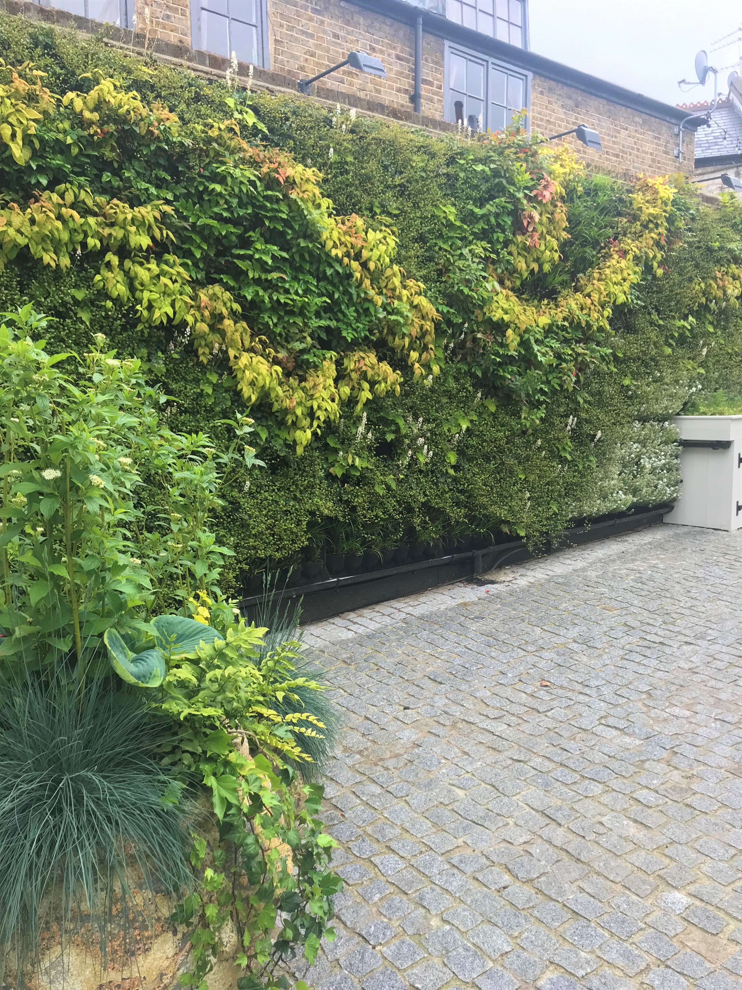 Living Walls for Property Developers Image of gated courtyard with Living Wall