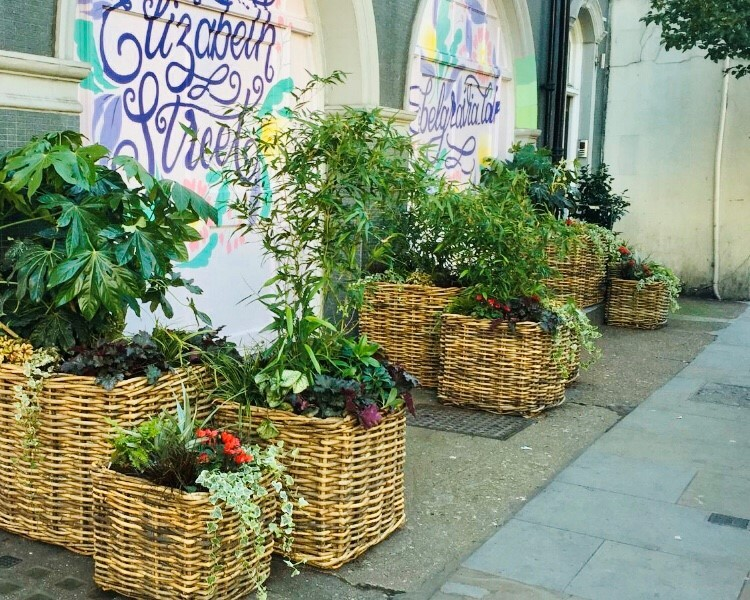 Living wall green wall baskets Planting at Elizabeth Street for Grosvenor